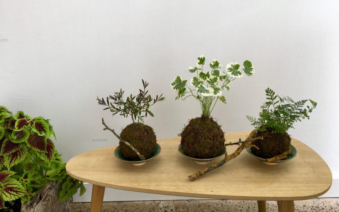 Kokedama – Japanese Moss Balls – NEW